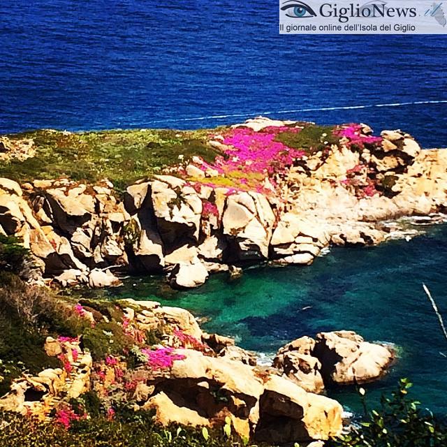 Lazzaretto 2015, in attesa di liberare anche la Gabbianara #giglio #giglioisland #isoladelgiglio #toscana #maremma #italy #Tuscany #maremmalocal #mare #sea
