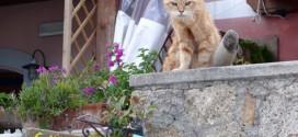 gatti isola del giglio giglionews