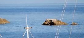 gabbianara isola del giglio giglionews foto giacomo mollo