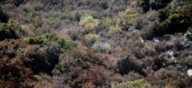 incendi abbruciamenti legge isola del giglio giglionews