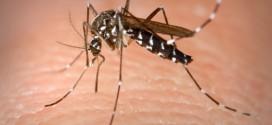 zanzare zanzara disinfestazione isola del giglio giglionews