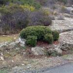 sculture isola del giglio sandro brizzi giglionews