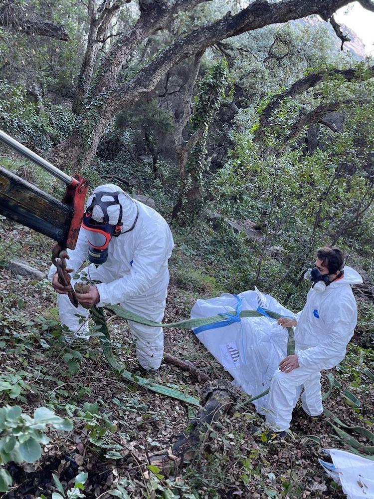 pulizia isola del giglio ambiente giglionews