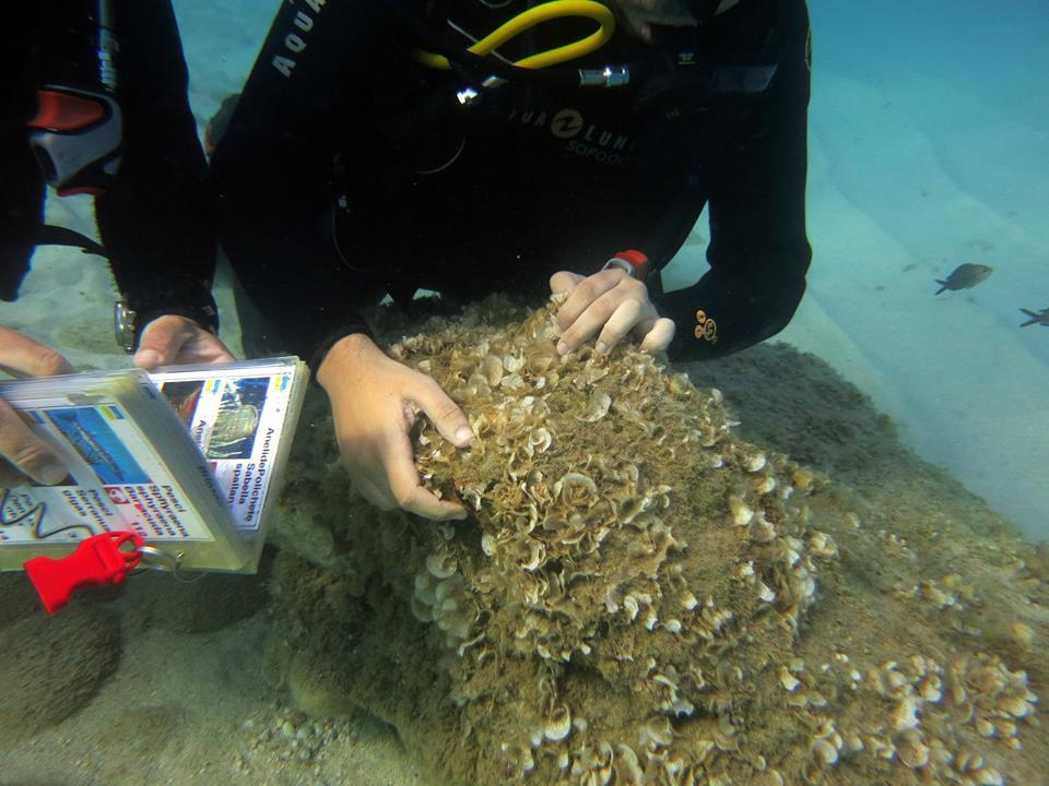 asbi subacquea isola del giglio campese giglionews