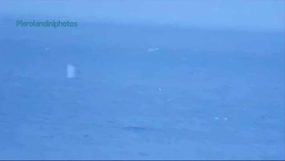 balena landini mare ambiente isola del giglio giglionews natura
