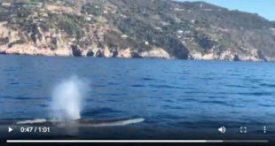 balenottere argentarola argentario isola del giglio giglionews
