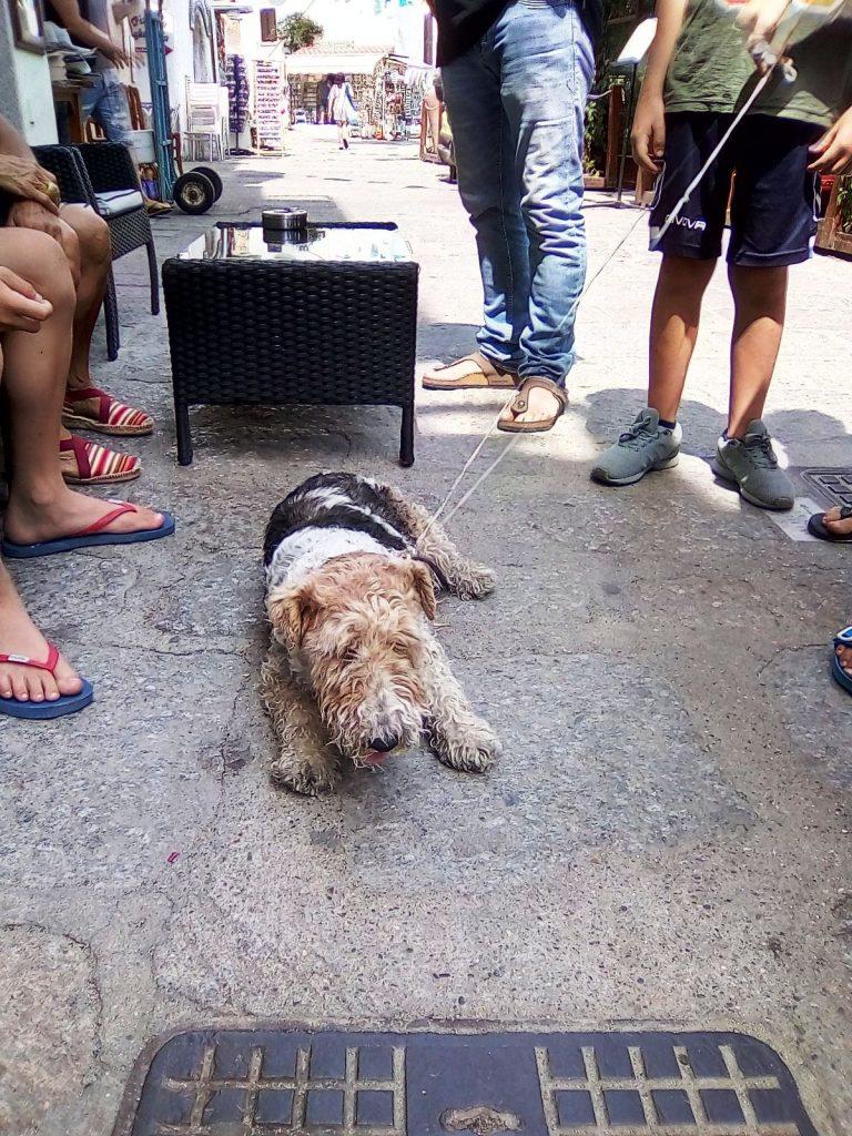 cane trovato isola del giglio porto giglionews