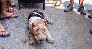 cagnolino cane trovato isola del giglio porto giglionews