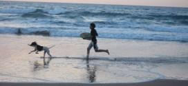ordinanza balneare cani animali spiaggia autobus isola del giglio giglionews