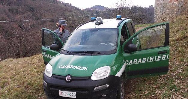pubbliche scuse carabinieri forestali forestale isola del giglio giglionews