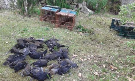 caccia forestale isola del giglio giglionews