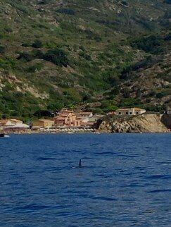 delfini isola del giglio campese giglionews
