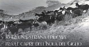 epidemia capre argentariana schiaffino isola del giglio giglionews
