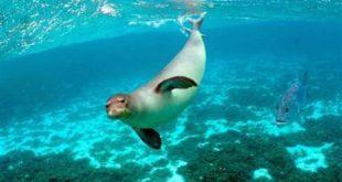 escrementi foca monaca capraia parco arcipelago toscano isola del giglio giglionews