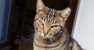 gatta maya smarrita isola del giglio giglionews