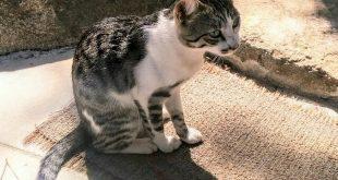 gattino gatto caldane isola del giglio giglionews