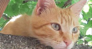 gatto smarrito cannelle isola del giglio giglionews