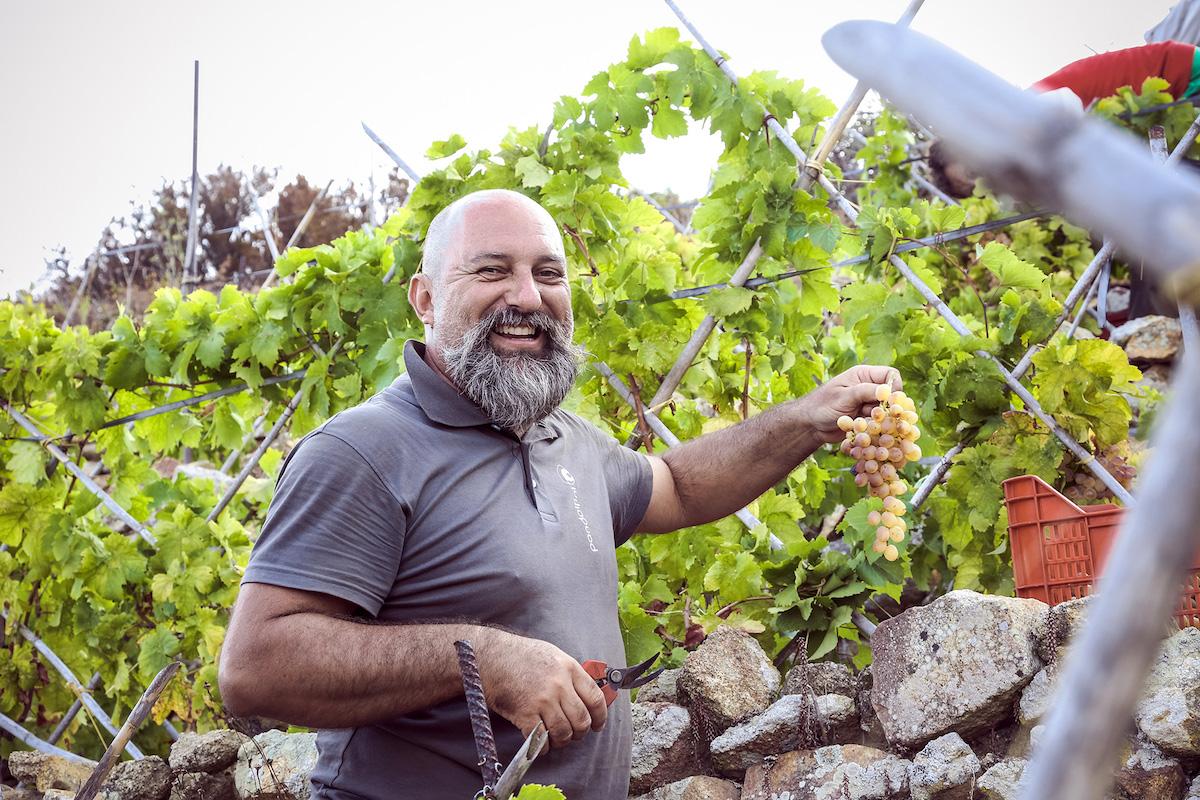 vino del giglio ansonico giovanni rossi simone fontuccia isola del giglio giglionews