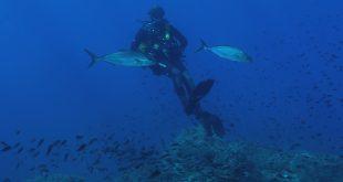 bando guide parco arcipelago toscano isola del giglio giglionews