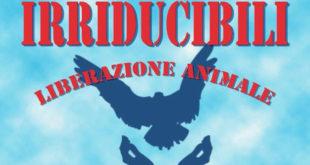irriducibili liberazione animale mufloni isola del giglio giglionews