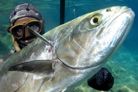 Ciao compagno di albe sul mar isola del giglio for Barchetta da pesca