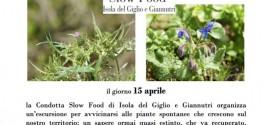 erbe slow food isola del giglio giannutri giglionews