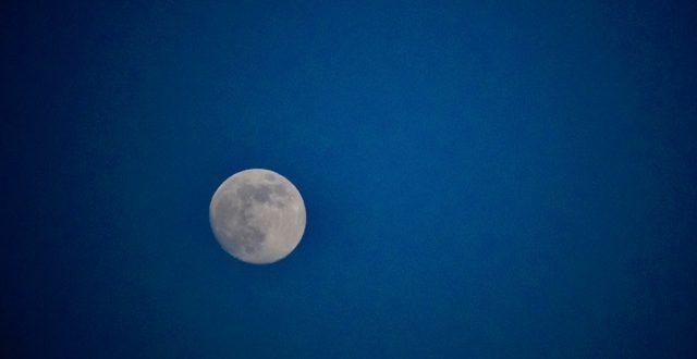 luna gigliese poesia palma silvestri isola del giglio giglionews