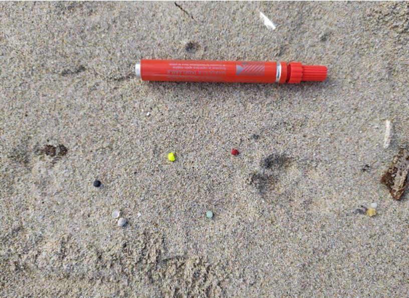 rifiuti microplastiche parco arcipelago toscano isola del giglio giglionews
