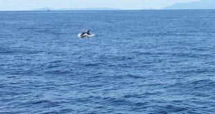 avvistamento orca capraia arcipelago toscano isola del giglio giglionews