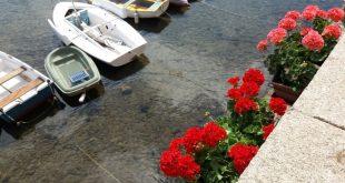 decoro urbano isola del giglio porto giglionews
