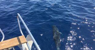 delfini cannelle isola del giglio giglionews