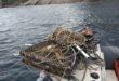 pulizia fondali marevivo isola del giglio giglionews