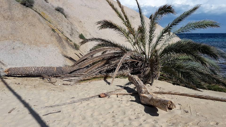 palma arenella temporale isola del giglio giglionews