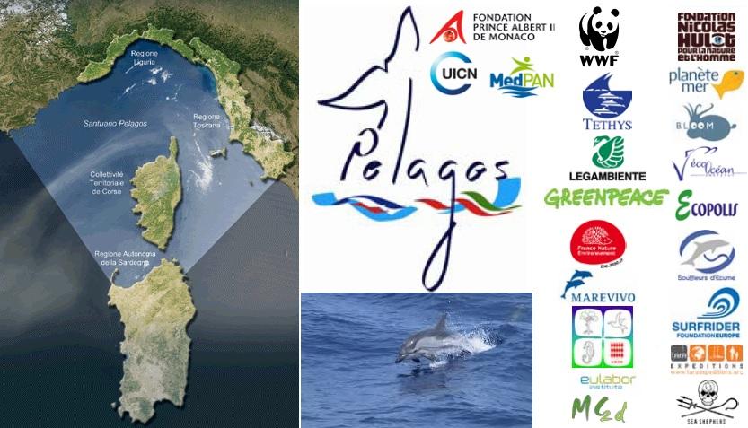 santuario cetacei pelagos isola del giglio giglionews
