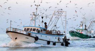 pescatori pescherecci isola del giglio giglionews
