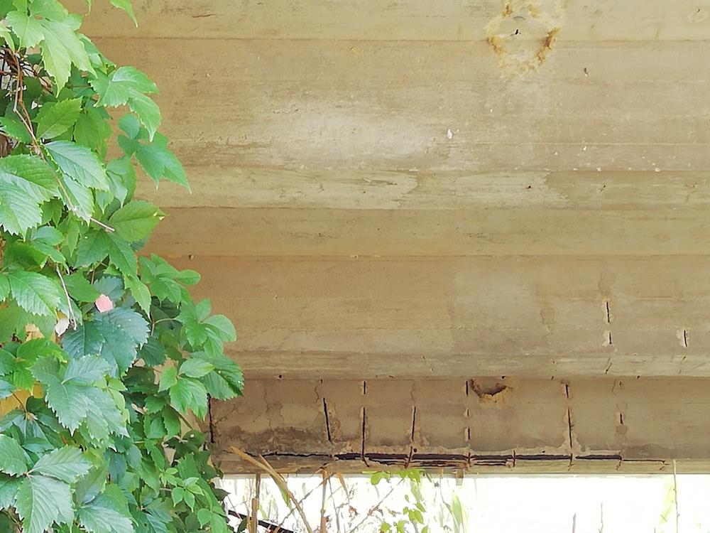 ponte arenella isola del giglio giglionews