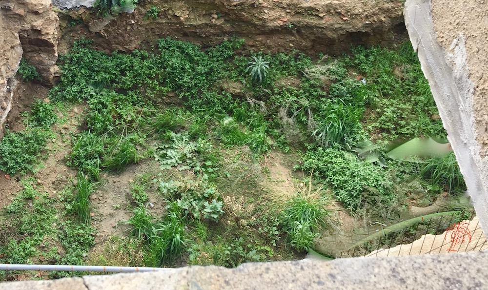prato verde poesia palma silvestri isola del giglio castello giglionews