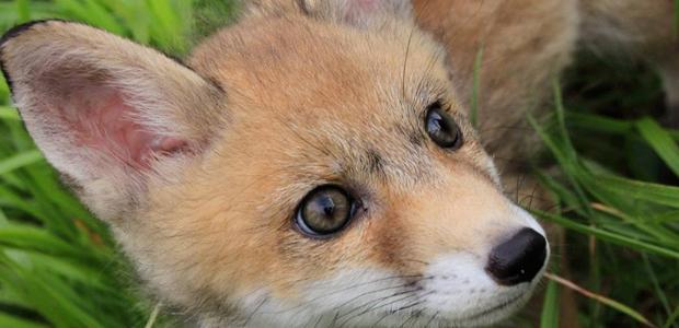 centro recupero animali selvatici isola del giglio giglionews