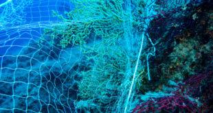 reti fondali diving isola del giglio giglionews