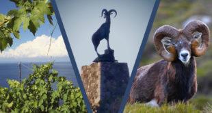 petizione mufloni isola del giglio giglionews