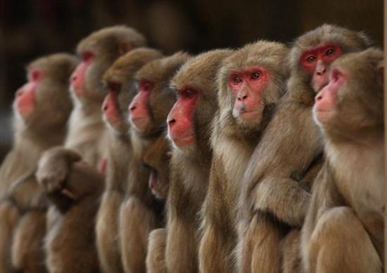 scimmie gas scarico chi isola del giglio giglionews