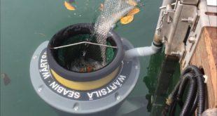 seabin cestino rifiuti ambiente isola del giglio giglionews