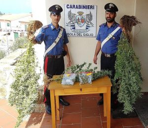 sequestro droga marijuana isola del giglio giglionews