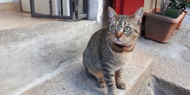 serafina gatto soriano isola del giglio castello giglionews