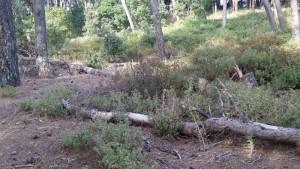 sottobosco forestale isola del giglio giglionews