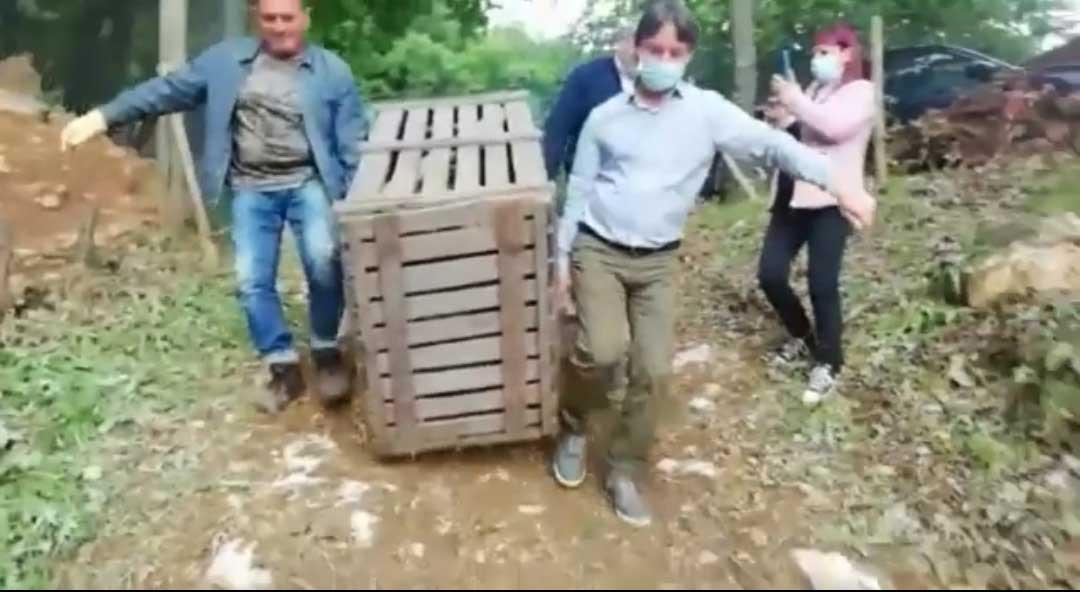 trasferimento mufloni isola del giglio giglionews
