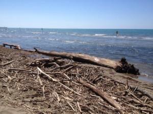 tronchi piena ombrone isola del giglio guardia costiera giglionews