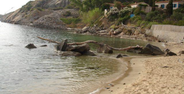 tronco spiaggia arenella isola del giglio giglionews
