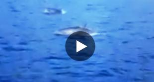 video delfini isola del giglio campese giglionews