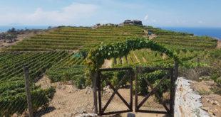 coltivatori vigna vigne vignaioli isola del giglio giglionews